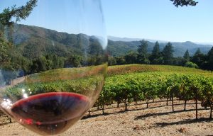 Napa Valley – Trinchero Cloud's Nest vineyard