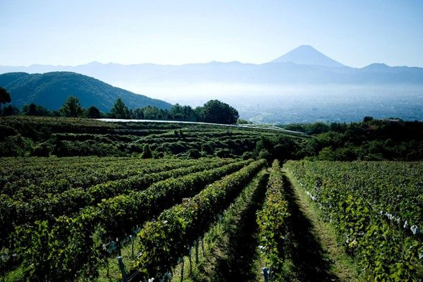 Is the sun rising on Japanese Wines?